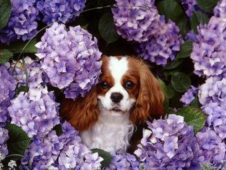 Dog Mom's Day at the Wilburton Inn